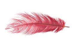 κόκκινο φτερών Στοκ εικόνες με δικαίωμα ελεύθερης χρήσης