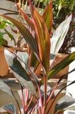 Κόκκινο φυτό έξι Tj στοκ εικόνες