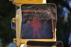 Κόκκινο φως & αράχνη στάσεων καθαρά Στοκ εικόνες με δικαίωμα ελεύθερης χρήσης