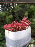 Κόκκινο φύλλο με την αγγειοπλαστική επαναχρησιμοποίησης στοκ φωτογραφία με δικαίωμα ελεύθερης χρήσης