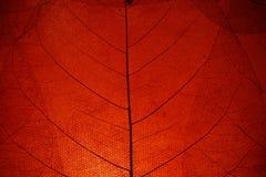 κόκκινο φύλλων ανασκόπηση Στοκ φωτογραφία με δικαίωμα ελεύθερης χρήσης