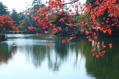 Κόκκινο φύλλο με τη λίμνη το φθινόπωρο Στοκ Φωτογραφία