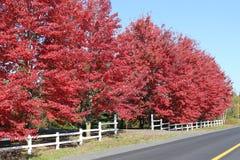 Κόκκινο φύλλωμα το φθινόπωρο στοκ εικόνα με δικαίωμα ελεύθερης χρήσης