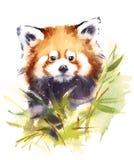 Κόκκινο χέρι απεικόνισης της Panda Watercolor ζωικό που χρωματίζεται ελεύθερη απεικόνιση δικαιώματος