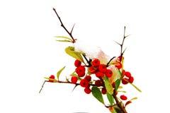 κόκκινο χιόνι μούρων κάτω στοκ φωτογραφία με δικαίωμα ελεύθερης χρήσης