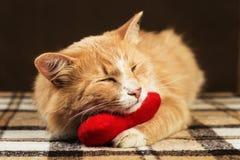 Κόκκινο χνουδωτό γατών κοιμισμένο παιχνίδι καρδιών βελούδου αγκαλιάσματος μαλακό Στοκ Φωτογραφία