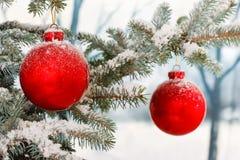 κόκκινο Χριστουγέννων μπι Στοκ Εικόνες