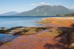 Κόκκινο χώμα στην ακτή Brunner λιμνών Στοκ φωτογραφία με δικαίωμα ελεύθερης χρήσης