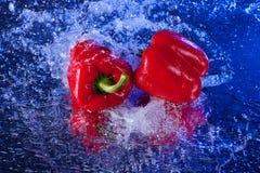 κόκκινο ύδωρ πιπεριών κουδουνιών Στοκ εικόνες με δικαίωμα ελεύθερης χρήσης