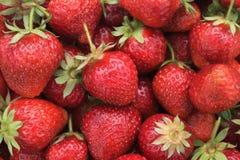 Κόκκινο ώριμο υπόβαθρο φραουλών, κινηματογράφηση σε πρώτο πλάνο Στοκ Εικόνα