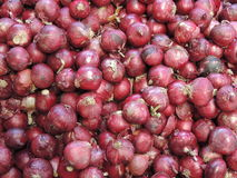Κόκκινο Allium κρεμμυδιών cepa Στοκ εικόνες με δικαίωμα ελεύθερης χρήσης