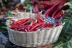 Κόκκινο annuum ` πιπεριών rawit μάτι ` πουλιών ` s καψικού Στοκ Φωτογραφία