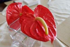 Κόκκινο Anthurium λουλούδι στον πίνακα Στοκ Φωτογραφίες