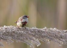 μεγάλο πουλί vid