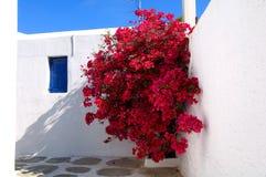 κόκκινο bougainvillea Στοκ εικόνες με δικαίωμα ελεύθερης χρήσης