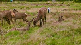 Κόκκινο Deers μεταξύ των περίεργων ανθρώπων φιλμ μικρού μήκους