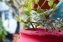 Κόκκινο flowerpot Στοκ εικόνα με δικαίωμα ελεύθερης χρήσης