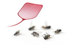 Κόκκινο flyswatter και νεκρές μύγες που απομονώνονται σε ένα άσπρο υπόβαθρο, γ Στοκ Φωτογραφία