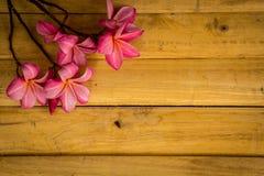 Κόκκινο frangipani που τοποθετείται σε ένα ξύλινο πάτωμα Στοκ Εικόνες