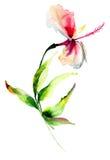 Κόκκινο hibiscus λουλούδι Στοκ φωτογραφίες με δικαίωμα ελεύθερης χρήσης