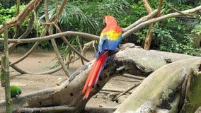 Κόκκινο macaw στο ζωολογικό κήπο, João Pessoa, ParaÃba, Brazi στοκ φωτογραφία με δικαίωμα ελεύθερης χρήσης