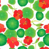 Κόκκινο nasturtium, πράσινα φύλλα σε ένα άσπρο υπόβαθρο πρότυπο άνευ ραφής στοκ φωτογραφία με δικαίωμα ελεύθερης χρήσης