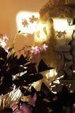 Κόκκινο Oxalis με τα ρόδινα λουλούδια Στοκ Φωτογραφίες