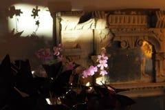 Κόκκινο Oxalis με τα ρόδινα λουλούδια Στοκ φωτογραφία με δικαίωμα ελεύθερης χρήσης