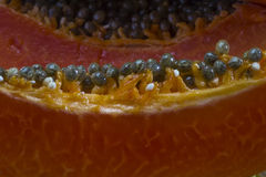 Κόκκινο Papaya Στοκ φωτογραφίες με δικαίωμα ελεύθερης χρήσης