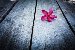 Κόκκινο Plumeria σε ξύλινο Στοκ Φωτογραφίες