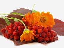 κόκκινο rowanberry φύλλων λουλο Στοκ φωτογραφίες με δικαίωμα ελεύθερης χρήσης