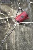 Κόκκινο stein Στοκ φωτογραφίες με δικαίωμα ελεύθερης χρήσης