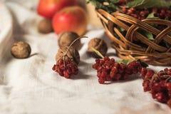 Κόκκινο viburnum στο ψάθινο καλάθι Στοκ εικόνα με δικαίωμα ελεύθερης χρήσης