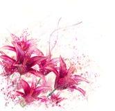 Κόκκινο watercolor λουλουδιών κρίνων Στοκ Φωτογραφία