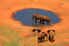 κόκκινο waterhole ελεφάντων στοκ φωτογραφία