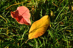 Κόκκινο Yela και κίτρινο Yela στοκ εικόνες με δικαίωμα ελεύθερης χρήσης