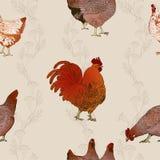 κόκκορας κοτόπουλων άνευ ραφής διάνυσμα ανασκό Στοκ Εικόνα