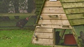 Κόκκορες πάλης στο κλουβί φιλμ μικρού μήκους