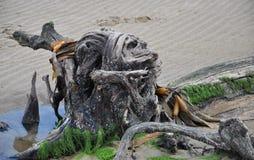 Κόλπος του Σουράτ - κολόβωμα στοκ φωτογραφία