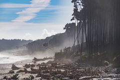 Κόλπος του Bruce, Νέα Ζηλανδία στοκ εικόνες