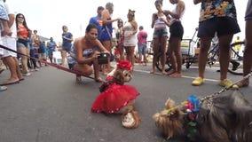 Κόμμα οδών καρναβαλιού Blocao για τα σκυλιά Ρίο Βραζιλία απόθεμα βίντεο
