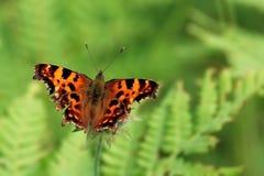 κόμμα πεταλούδων στοκ εικόνες με δικαίωμα ελεύθερης χρήσης