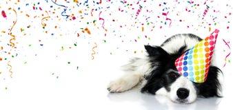 Κόμμα σκυλιών εμβλημάτων Τα γενέθλια εορτασμού κόλλεϊ συνόρων, καρναβάλι ή το νέο έτος με ένα καπέλο σημείων Πόλκα με μια κουρασμ στοκ εικόνα με δικαίωμα ελεύθερης χρήσης