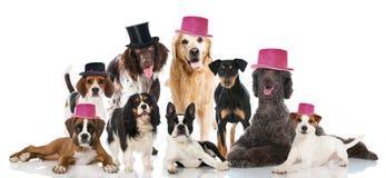 Κόμμα σκυλιών Στοκ φωτογραφία με δικαίωμα ελεύθερης χρήσης