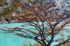 Κόνδορας της Αργεντινής Mirador Laguna Στοκ Φωτογραφίες