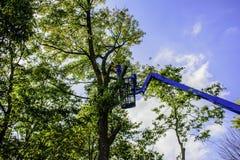Κόπτης δέντρων Στοκ Φωτογραφίες