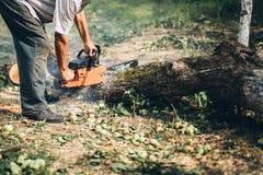 Κόπτης κορμών, ξύλο και τεμαχισμός ξυλείας Τέμνοντα κούτσουρα δασοφυλάκων στοκ φωτογραφία με δικαίωμα ελεύθερης χρήσης