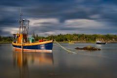 Κόπτης ψαριών της Skye Στοκ Εικόνα