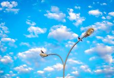 Κόρακες στο φωτεινό σηματοδότη Στοκ φωτογραφία με δικαίωμα ελεύθερης χρήσης