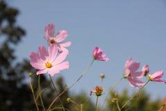 Κόσμος λουλουδιών Στοκ εικόνα με δικαίωμα ελεύθερης χρήσης